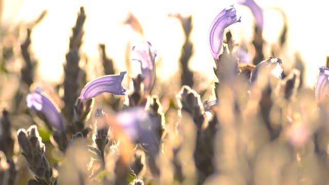 panning : tiny purple garden video