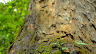 panning : trunk tree to top of tree video