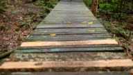 panning : walking wooden way in forest video