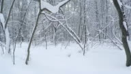 Panorama in winter forest after a snowfall. video