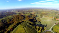 HD: Panoramic Shot Of Viniferous Region video