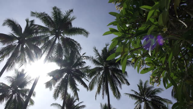 Panoramic view from below of tops of palm trees against the background of the solnetsny blue sky in the tropical resort video