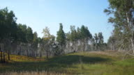 Panoramic view of forest growing in wild nature video