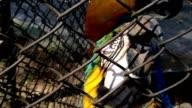 Papagaio. Parrot inside bird cage video