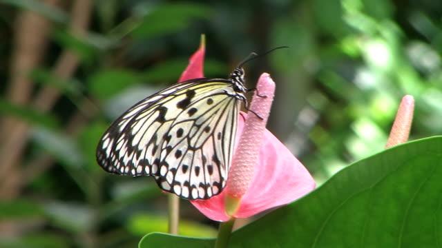 Paper Kite video