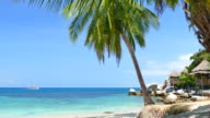 Paradise Beach with Blue Turquoise Sea and Coconut Palm Tree video