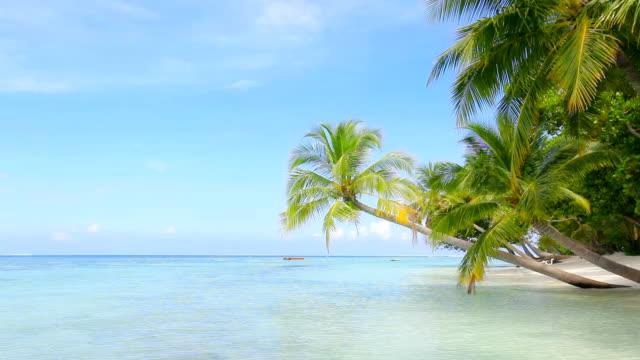 Paradise Island video