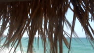Paradise video