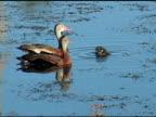 Parents Watching Duckling video