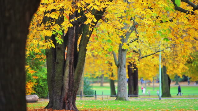 Park in autumn video