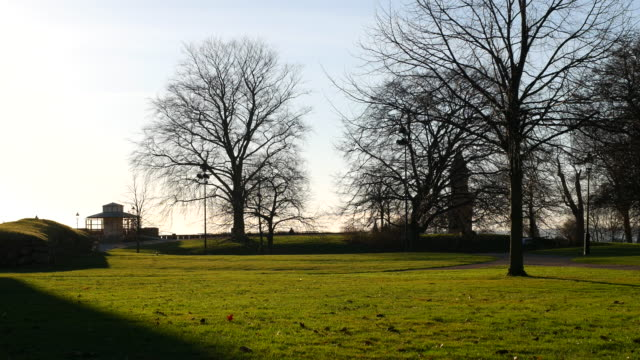 Park in Helsingborg at sunset. Trees and grass, spring video