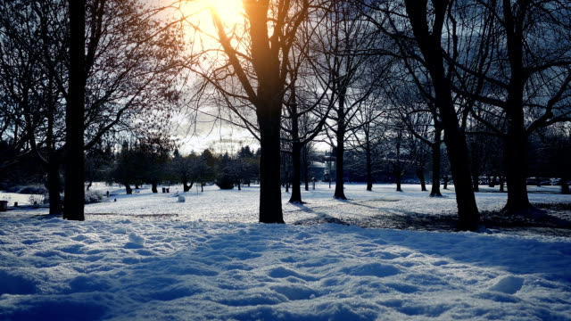 Park In Winter With Sun Glowing video