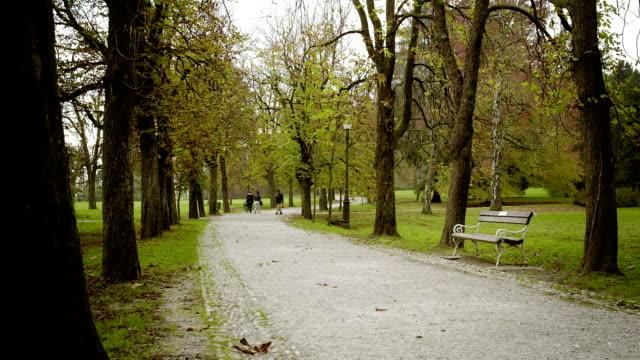 Park on an autumn morning video