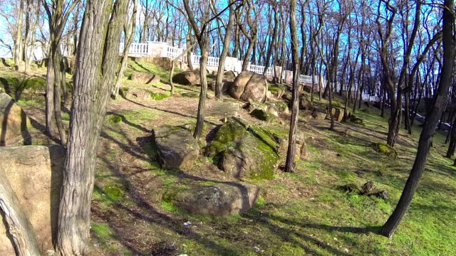 Park with trees and stones. Aerial video