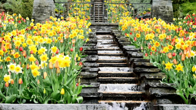 Park with tulips and waterfall on the island of Mainau. video