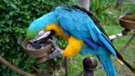 Parrot bird video