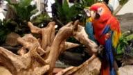 Parrot close video