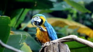 Parrot, Macaw relax video