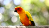 Parrot on the branch video