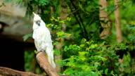 Parrot video