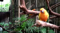 Parrots sitting on branches video