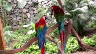 Parrots video