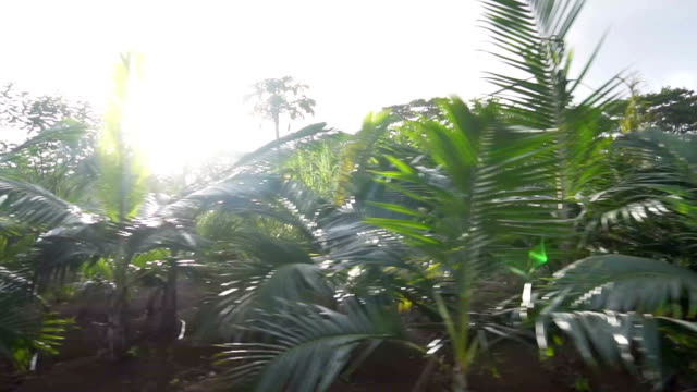 Passing by a tropical jungle video