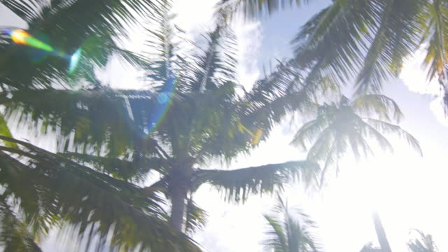 Passing by palm trees video