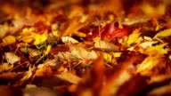 Passing Colorful Fall Leaves Macro video