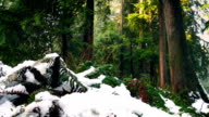 Passing Ferns Buried In Snow In The Forest video