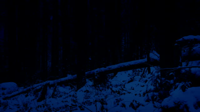 Passing Snowy Forest Slope At Night video