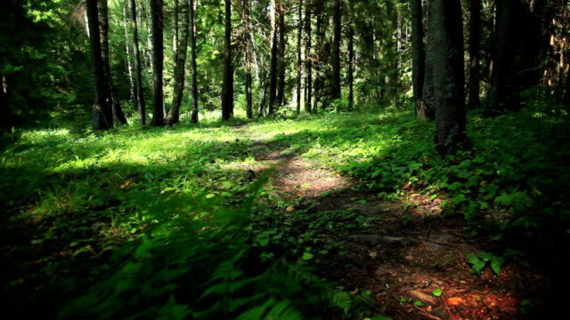 Path in green summer forest video