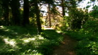Path in woods, green bushes and trees. STEADICAM shot. video