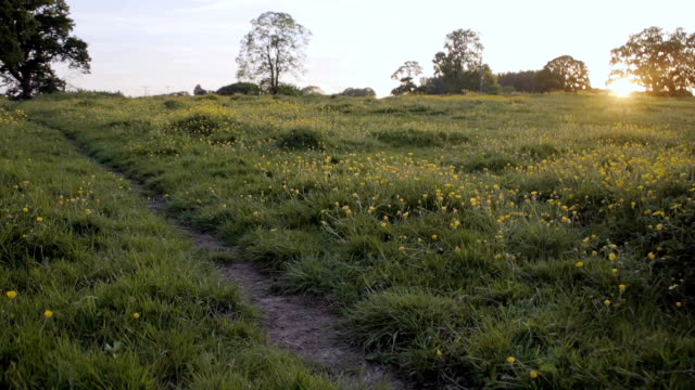 Pathway Through Buttercup Meadow At Sunset video