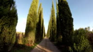 Pathway with Cypress trees in Tuscany video