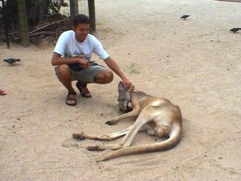 Patting A Kangaroo video