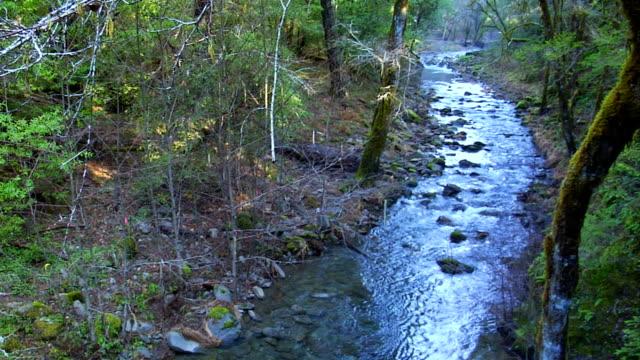 Peaceful creek video