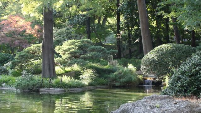 Peaceful garden. video