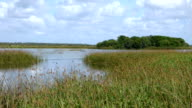 Peaceful View of a Wetlands With Blackbirds and Nature Sounds video