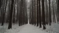 Peaceful walk through a forest of tall pines as fresh snow falls, ronin stabilized video
