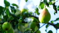 Pears on the background of the sky. video