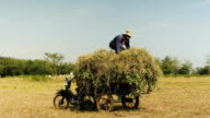 Peasants loading grass above peanut plants onto a trailer video