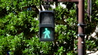 Pedestrian walk light-bus crosses video
