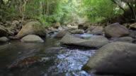 pedras no riacho 001 video