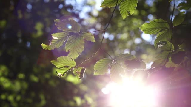 Peeking Through Leaves video