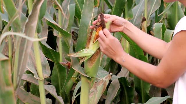 Peeling Corn Hd 1080 Video video