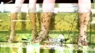 Peeling skin feet of tropical fish in the water video