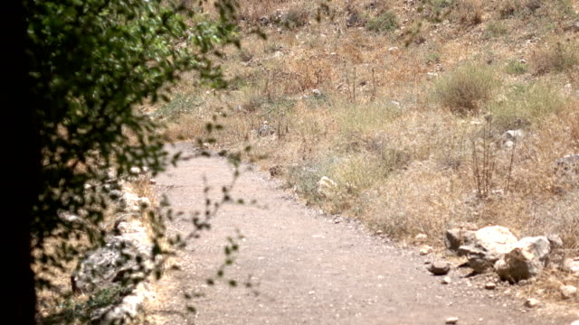 Peering Down Dusty Path at Base of Mountain in Israel video