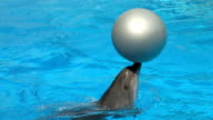 HD Peforming Dolphins playing with silver balls, closeup video