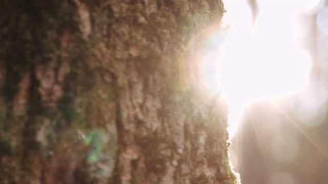 Peice of tree in sunlight video